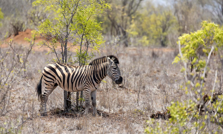 Kruger National Park tour