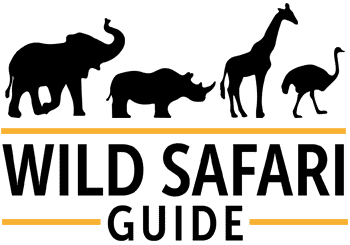 Wild Safari Guide