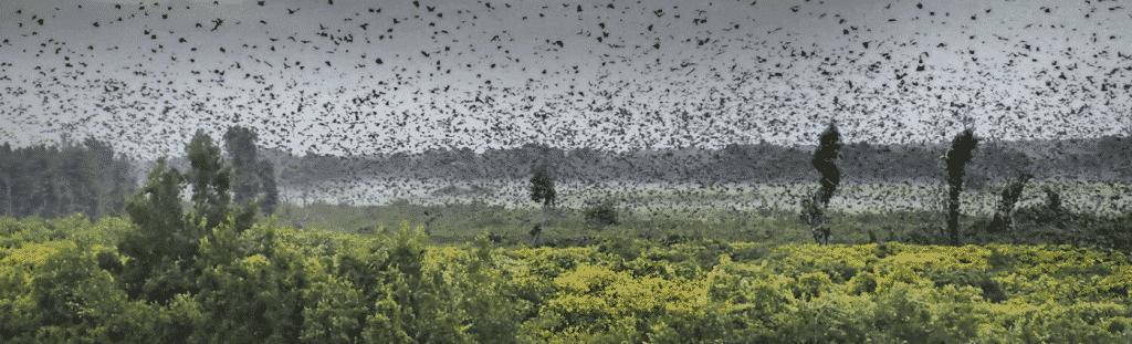 Bat Migration