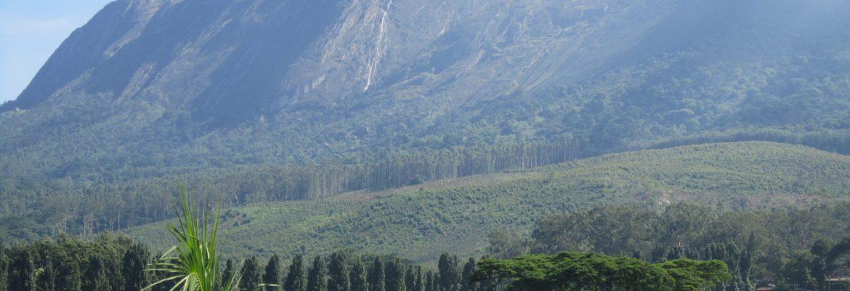 Mulanje Mountain Forest Reserve