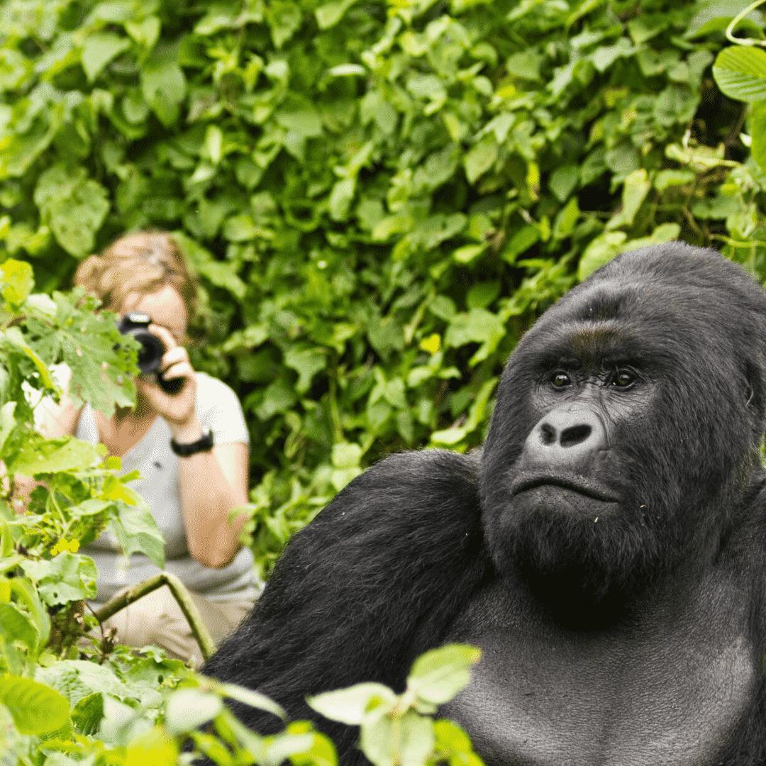 Primate Trekking