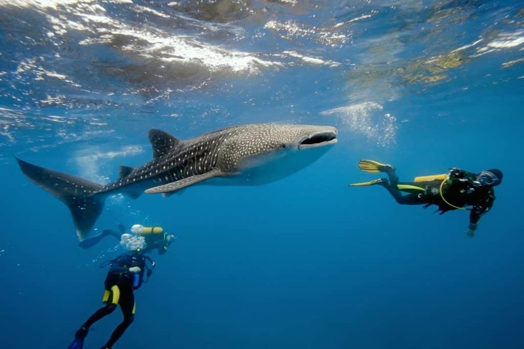 Diving Safari