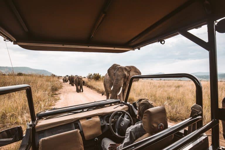 Land Safari