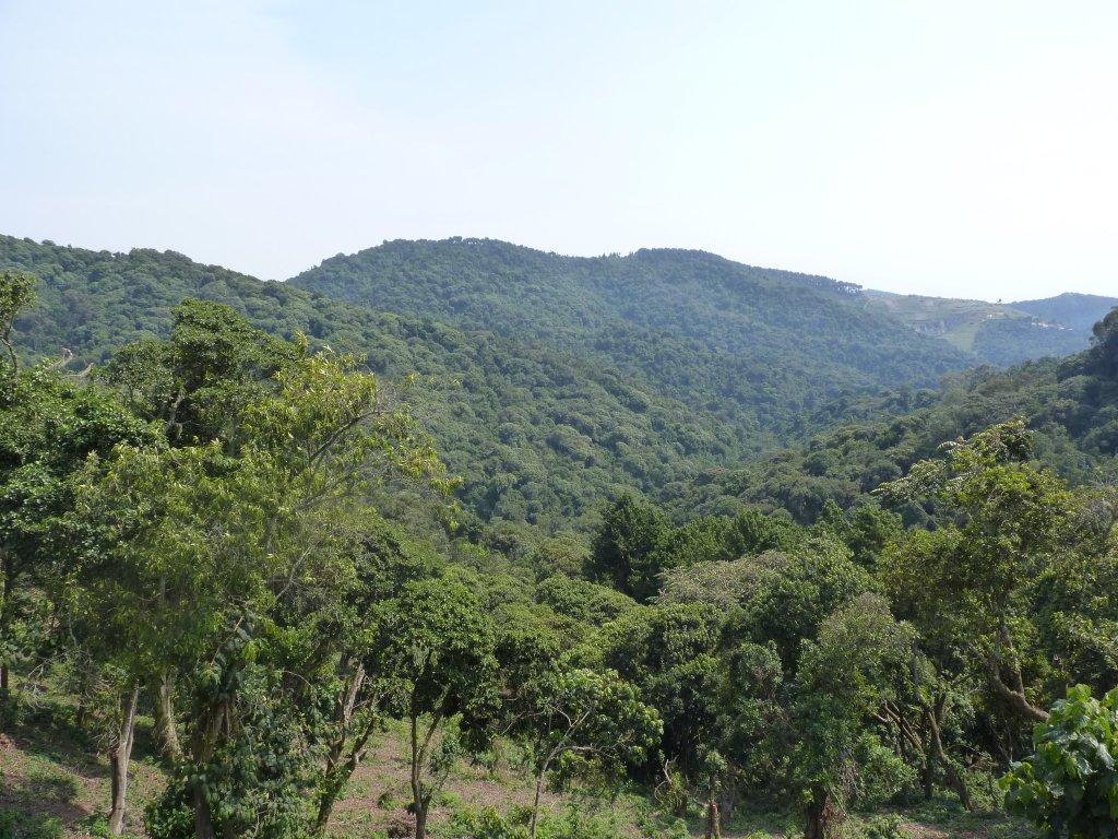 Gishwati Mukura National Park
