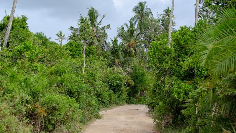 Jozani Chwaka National Park