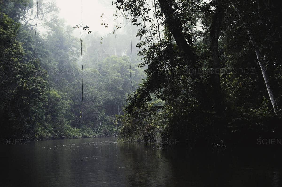 Minkébé National Park