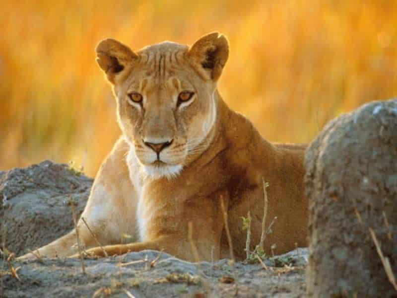 Tsavo National Parks