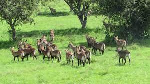 Liparamba Game Reserve