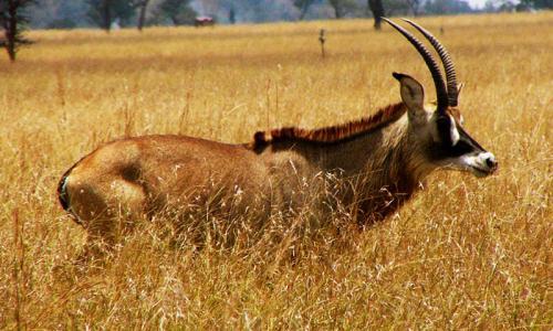 Ruma National Park