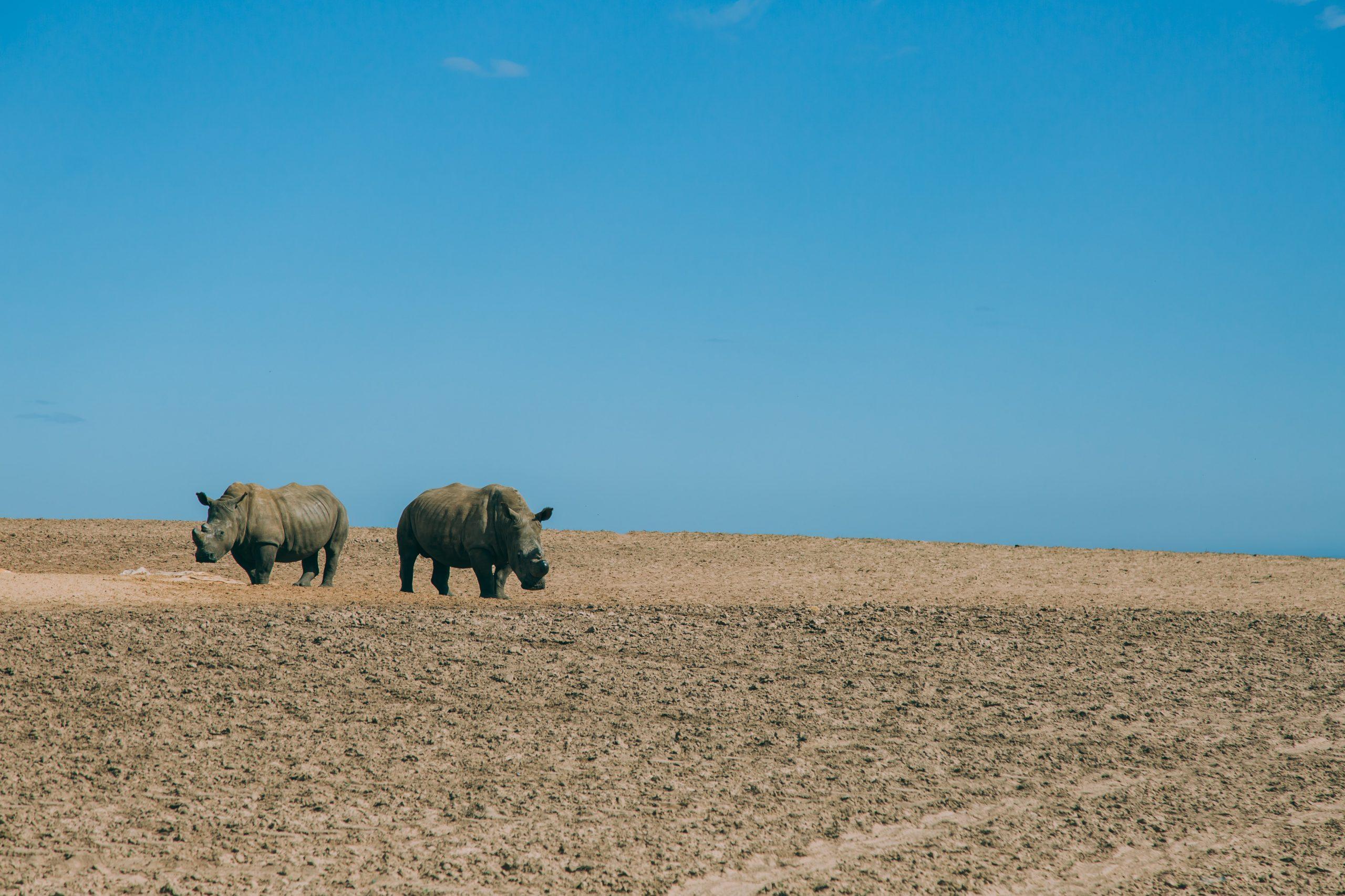 Buffelsfontein Game Reserve