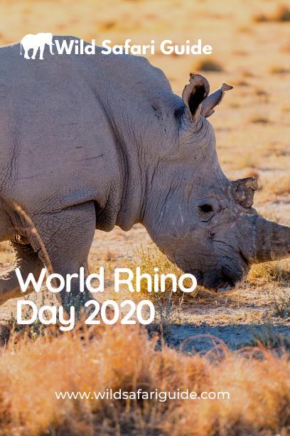 World Rhino Day 2020