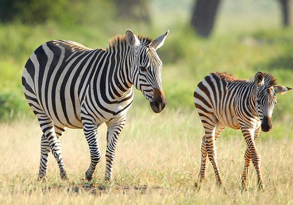 Uwanda Game Reserve