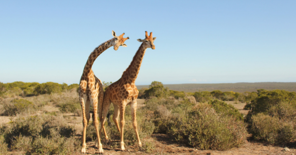 game reserves near cape town