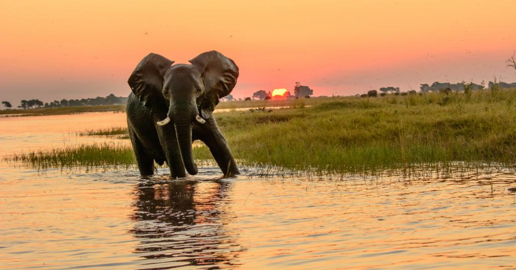 Safari to Botswana