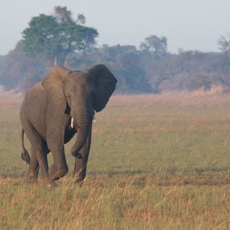 best safari parks in zambia