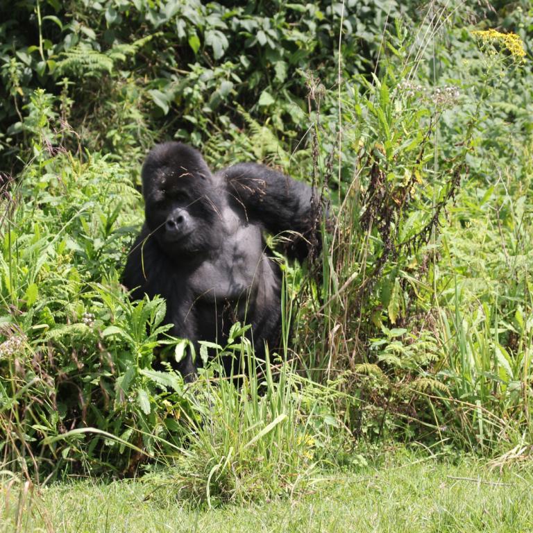 best safari parks in congo