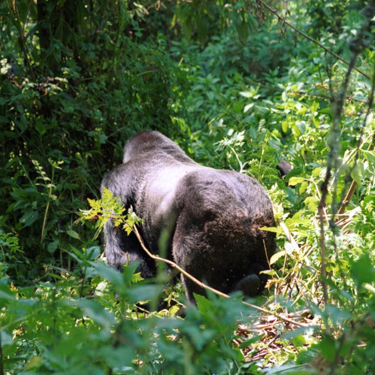 best safari parks in rwanda