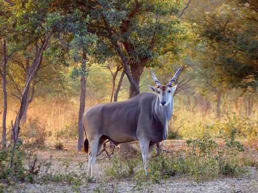 Mangetti National Park