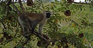 Gilé National Reserve