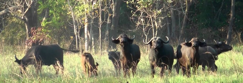 Marromeu National Reserve