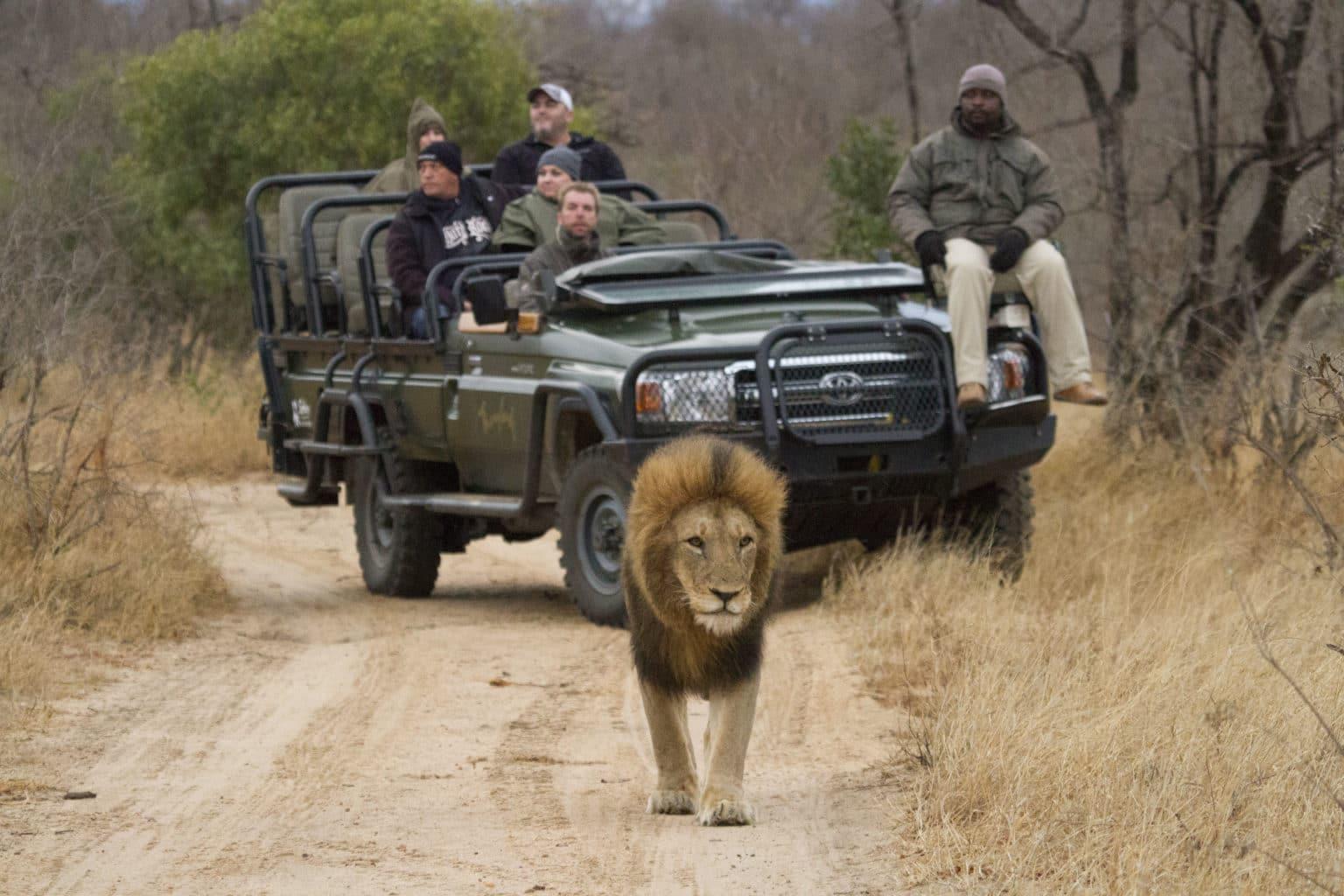 Thornybush Game Reserve