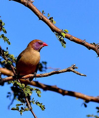 Witsand Kalahari Nature Reserve