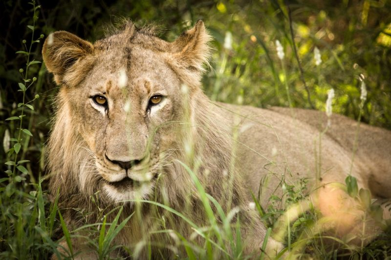 Greater Makalali Private Game Reserve
