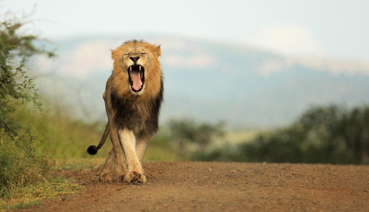 Thanda Safari Private Game Reserve