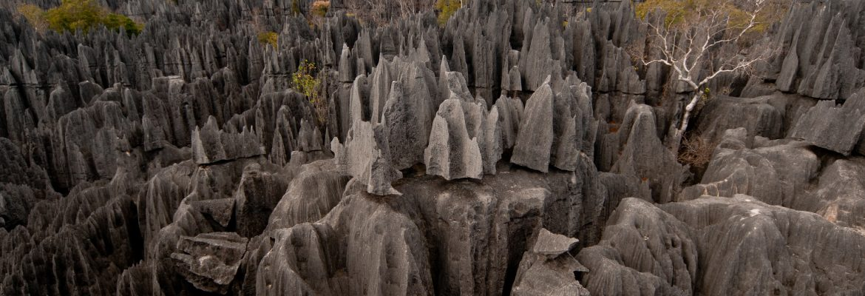 Bemaraha National Park