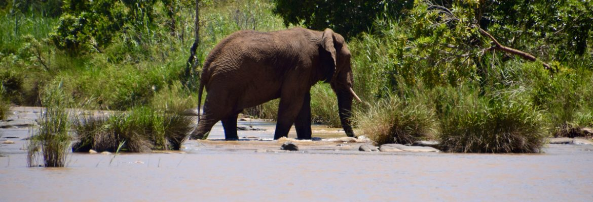 Amakhosi Private Game Reserve