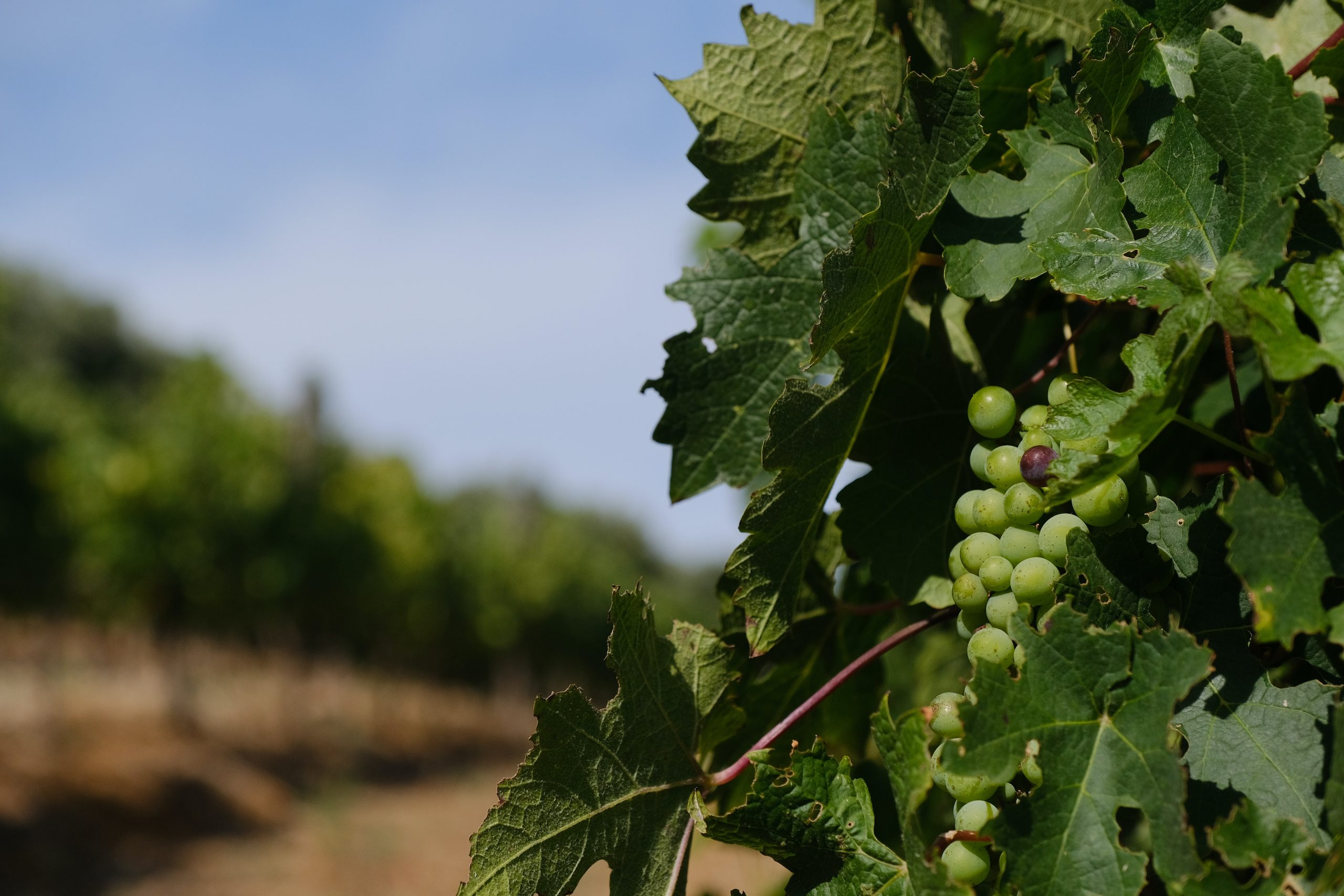 Visit South Africa winelands