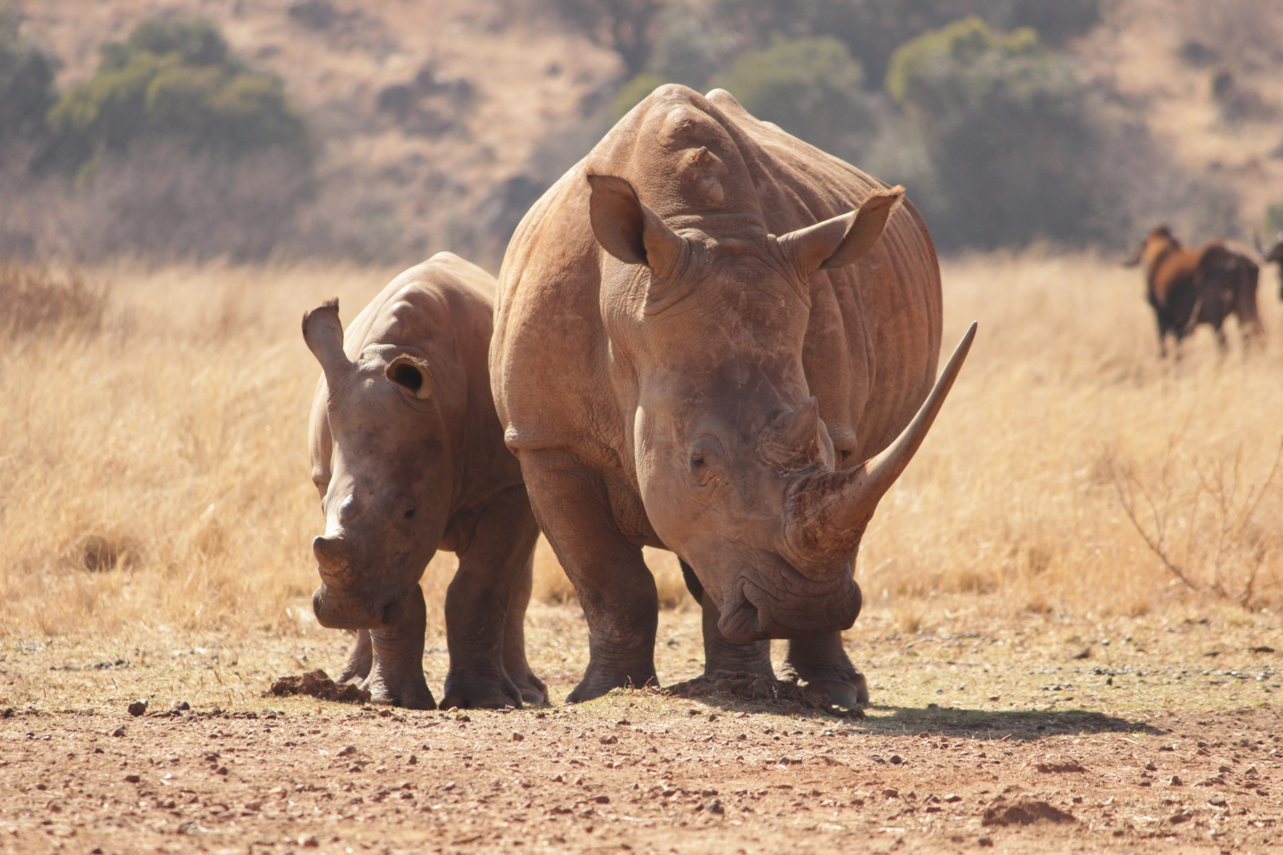 Visit South Africa Wildlife