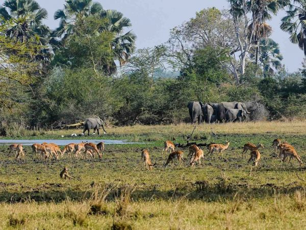 Wildlife in Malawi